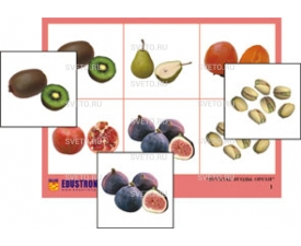 """Лото  """"Фрукты, ягоды, орехи"""""""