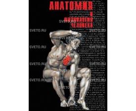 """Диск """"Анатомия"""" (часть 1)"""