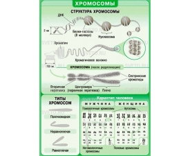 "Таблицы ""Биология. 10-11 классы. Цитология. Генетика. Селекция"" (12 таблиц)"