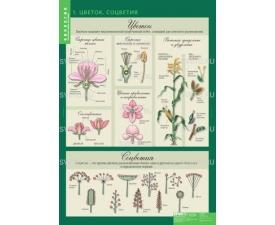 """Таблицы """"Биология. 6 кл. Растения. Грибы. Лишайники"""" (14 таблиц)"""