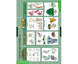 """Таблицы """"Общее знакомство с цветковыми растениями"""" (6 таблиц)"""