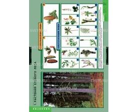 """Таблицы """"Растения и окружающая среда"""" (7 таблиц)"""